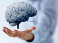 Гипоталамус: функции, строение, нарушения