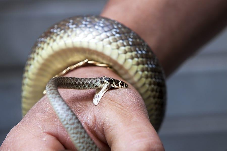 В Питере озверели змеи. Что делать при укусе?