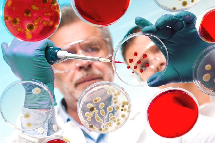 Фаги усиливают бактериальную инфекцию