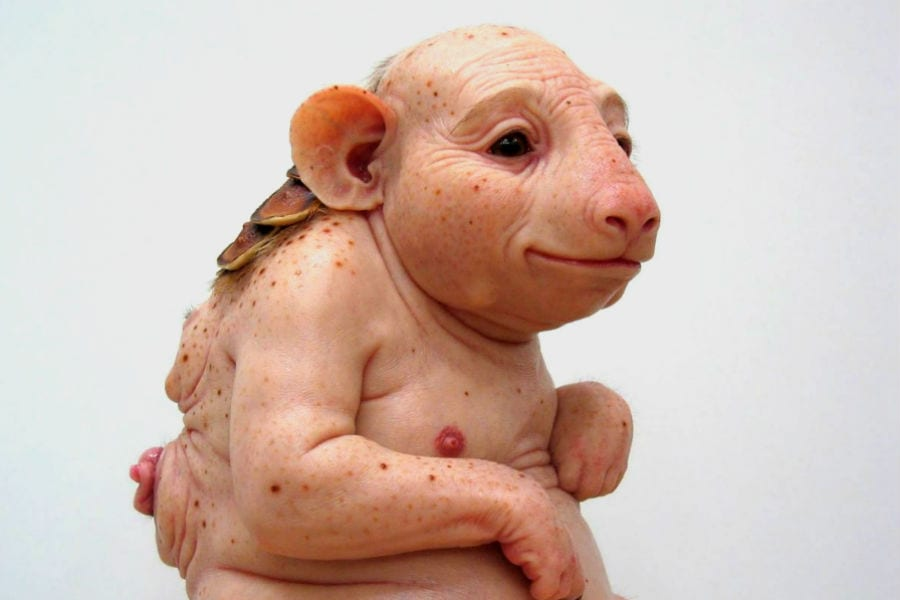 В Японии создадут гибридных свинолюдей