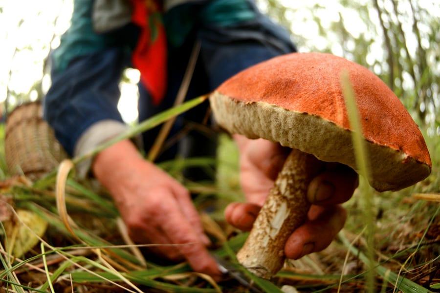 Рак простаты: почему мужчинам нужно есть грибы