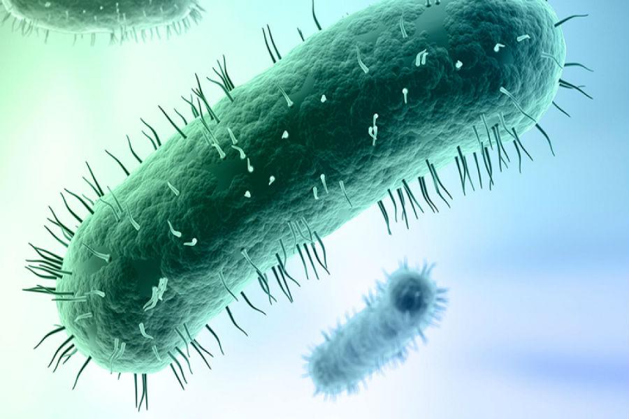 Микоплазмы стали устойчивы к сильным антибиотикам
