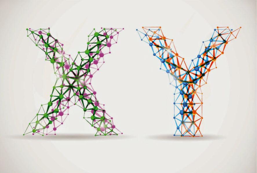 Хромосомы X и Y