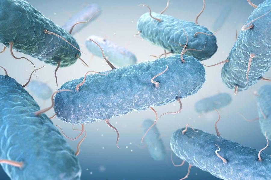 Бактерия Coli