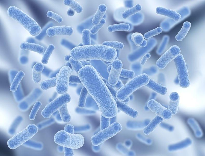 Кишечная бактерия
