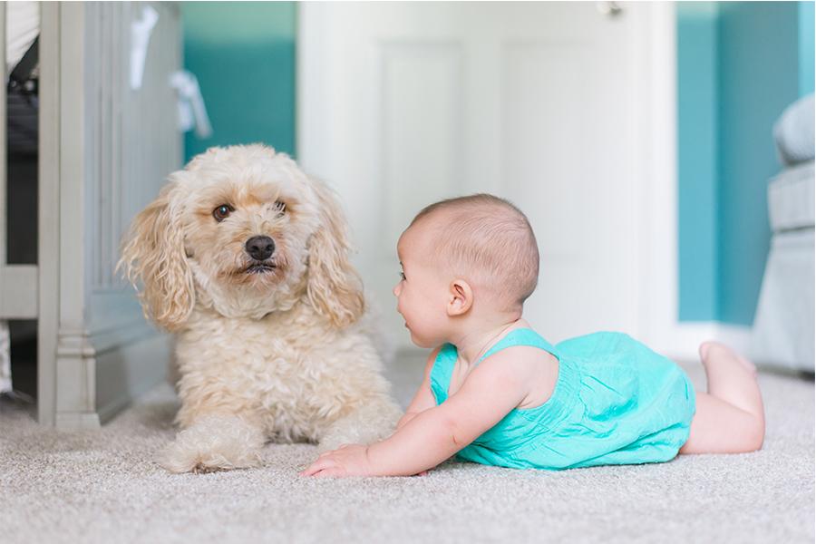 Взросление рядом с собакой предотвращает детскую шизофрению