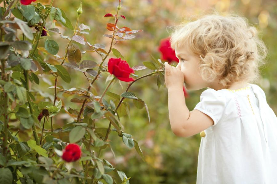 Хотите лучше учиться? Нюхайте розы! Запахи улучшают обучение