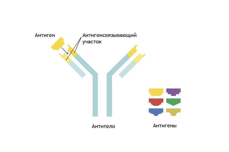 Антиген-антитело