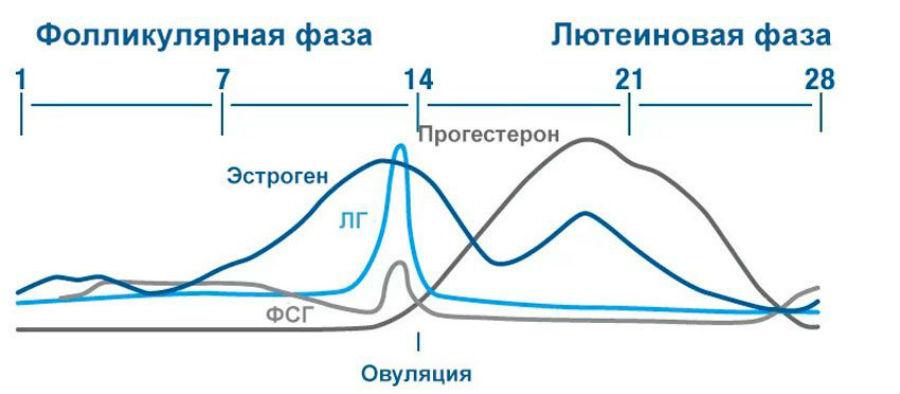 Изменение уровня эстрадиола во время менструального цикла