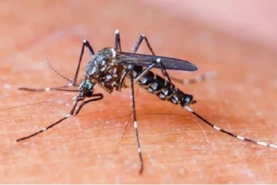 Как правильно лечить малярию: назван эффективный вариант тройной терапии