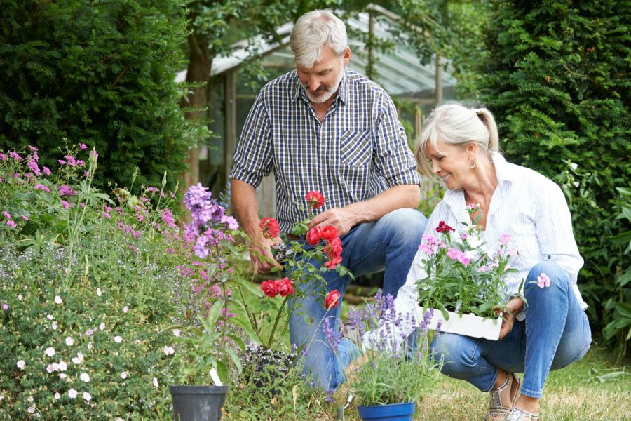 Садоводство и другие виды досуга замедляют старение мозга и предотвращают возрастное слабоумие