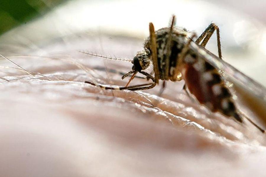 Ученые нашли способ победить малярию