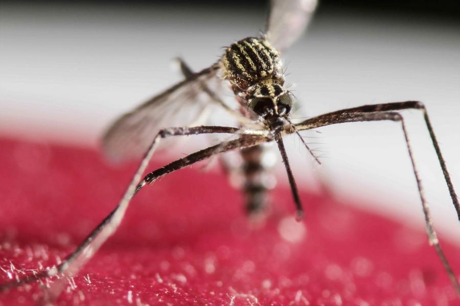 Ученые нашли способ создать общую вакцину против вирусов, переносимым комарами