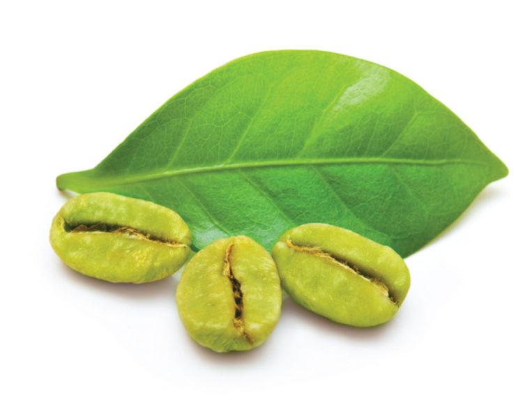 Хлорогеновая кислота в зеленых кофейных зернах