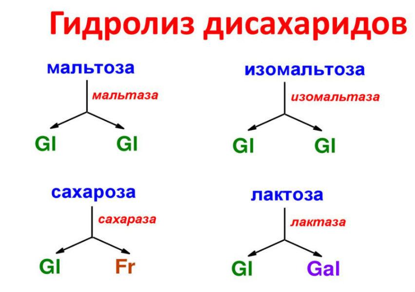 Гидролиз дисахаридов