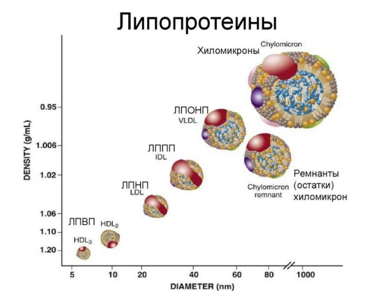 Крови такое что анализ лпонп биохимический лечится у мужчин цистит чем