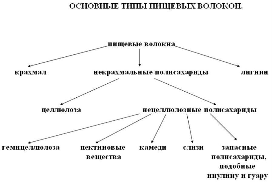 Основные типы пищевых волокон