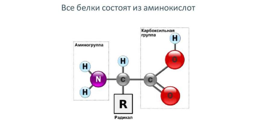 Состав белков