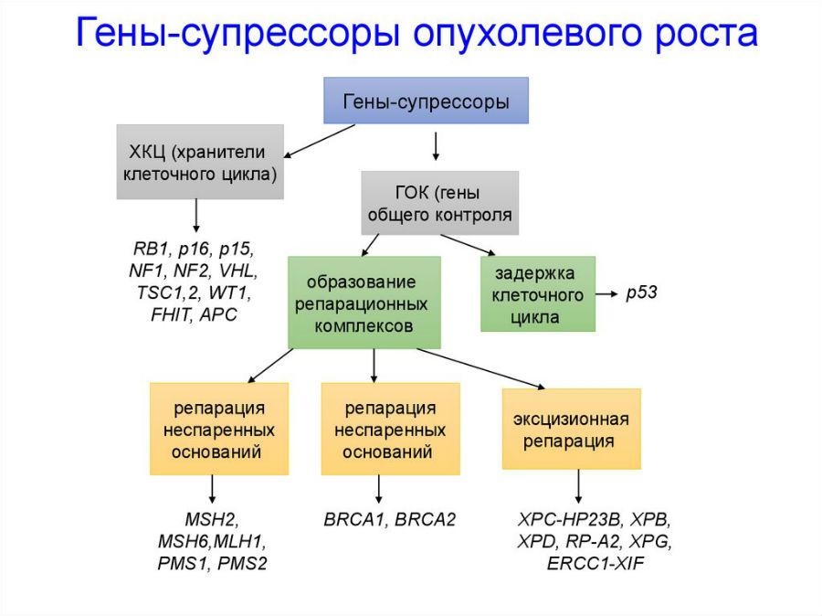 Гены-супрессоры опухолевого роста