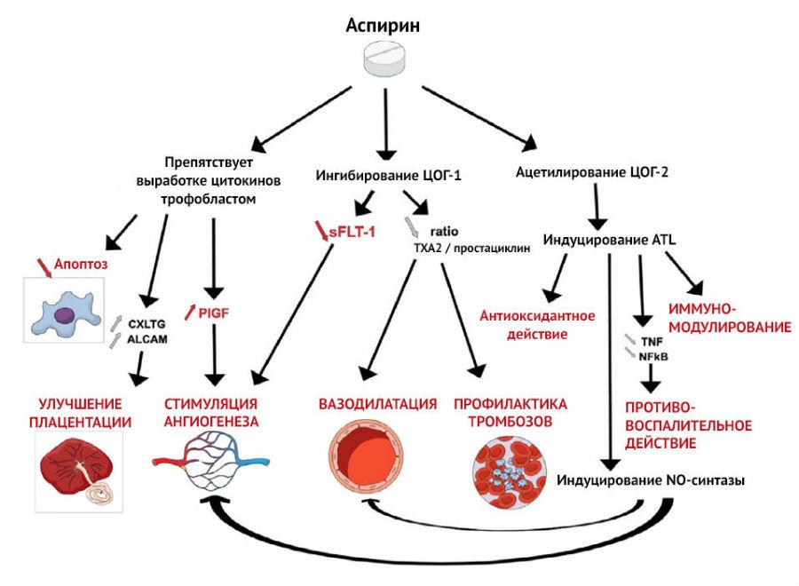 Механизм действия ацетилсалициловой кислоты
